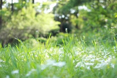 小人が出てきそうな草原